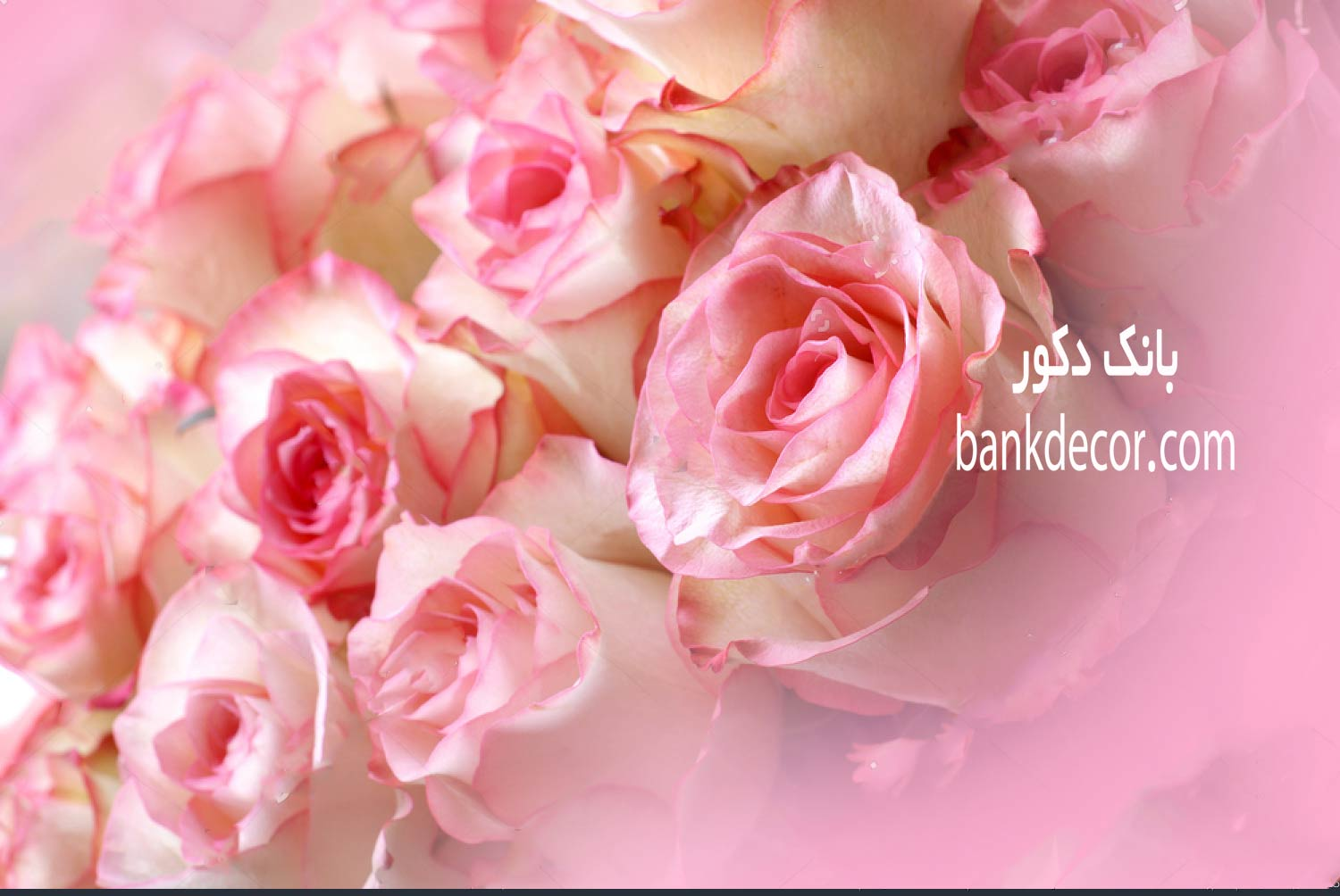 stock-photo-large-bright-bouquet-of-freshly-cut-big-beautiful-white-pink-roses-259610.jpg