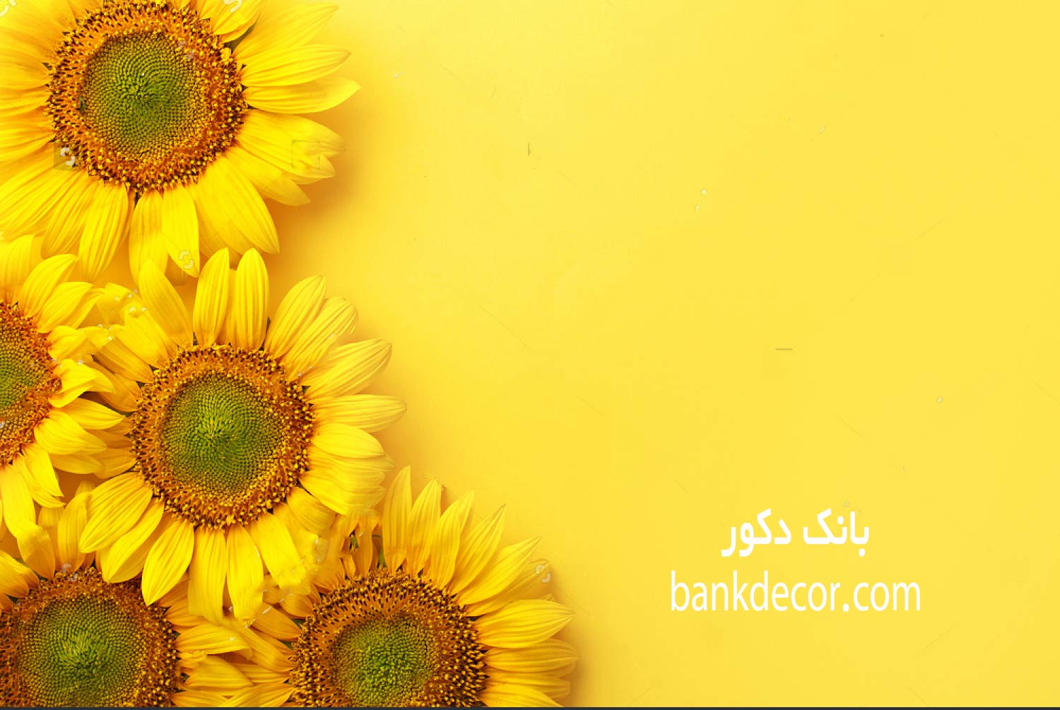 stock-photo-sunflowers-on-a-yellow-background-copy-space-top-view-693773890.jpg